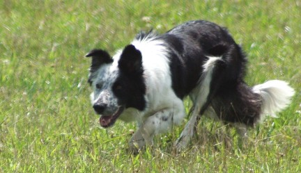 2006-09-10-repos-herding-style-original